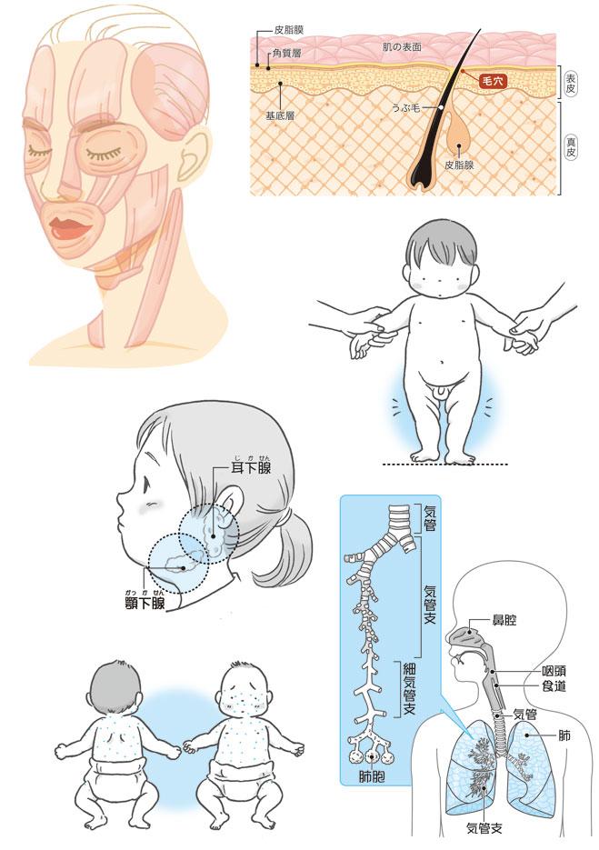 美容と子供医学イラスト