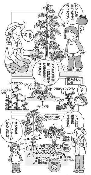 家庭菜園イラスト